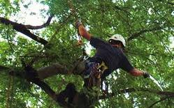 man in tree doing trimming