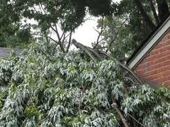 Tree branches fallen on home
