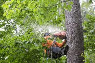 man with chainsaw in tree