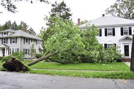 Tree that fell on home