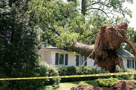Big tree that fell on house